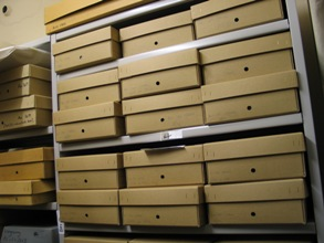 Archival boxes on shelves